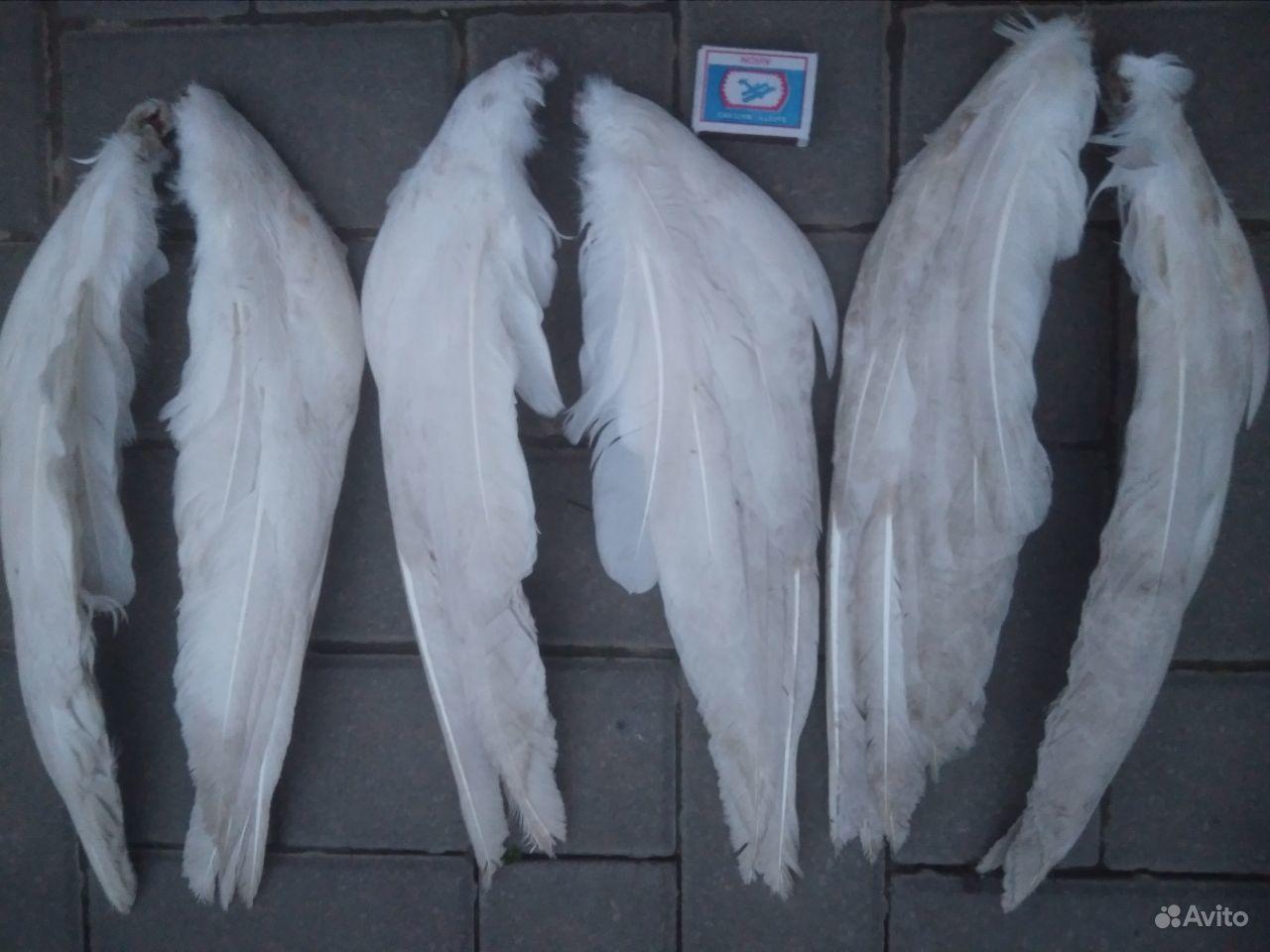 Крылья гусинные в Краснодаре - фотография № 2