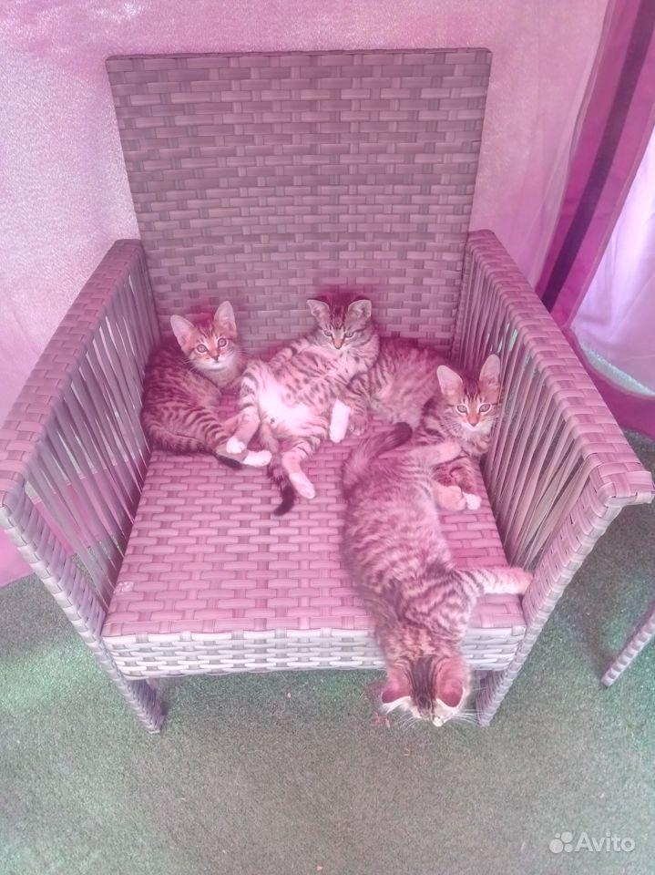 Отдаю котят в дар в Чехове - фотография № 8