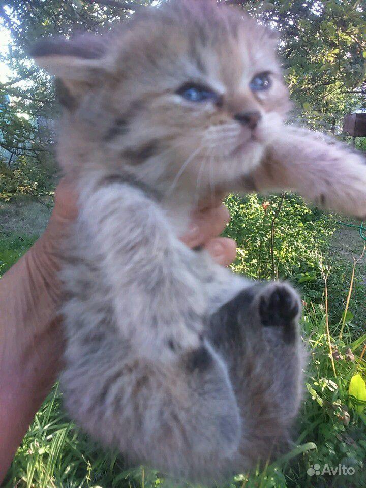 Котята, 1 месяц. Приучены к лотку в Саратове - фотография № 2