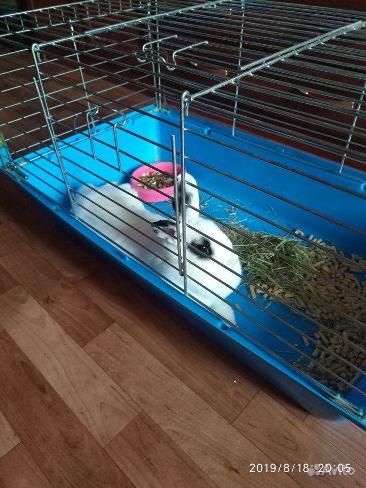 Кролик по имени Жорик