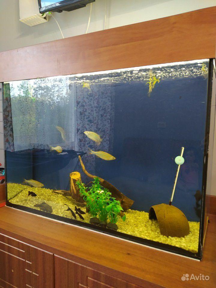 Аквариум 80л + рыбки купить на Зозу.ру - фотография № 1