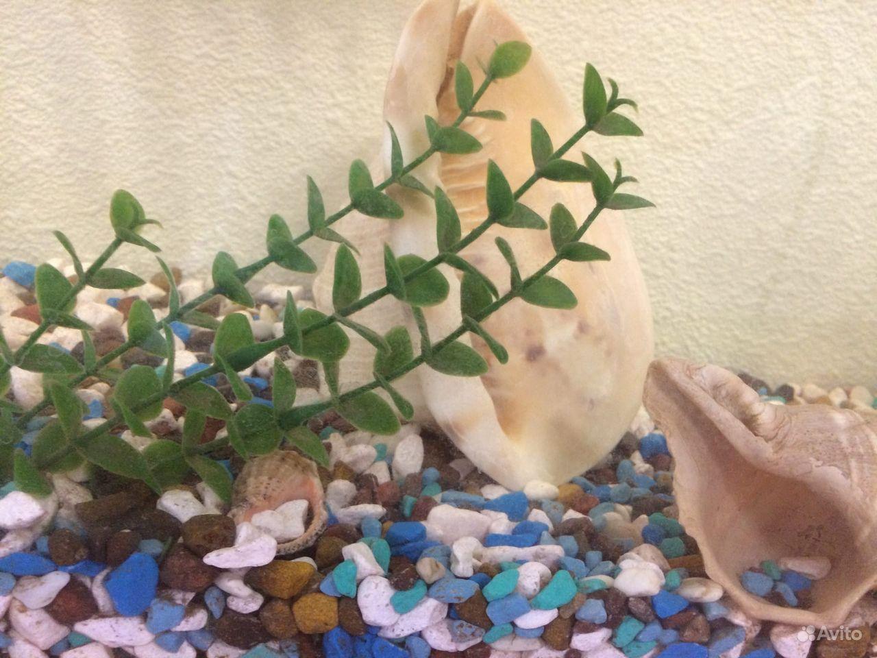 Аквариум с рыбками 30 литров купить на Зозу.ру - фотография № 5