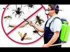 Служба сэс-уничтожение насекомых