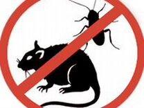 Травить тараканов клещей клопов блох ос муравьев