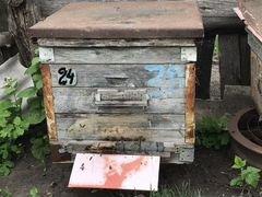 Пчёлы семьи