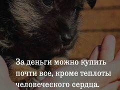 10 Щенков отдадим бесплатно в харошие руки