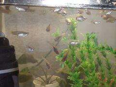 Рыбки и ростения