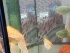 Рыбки большие