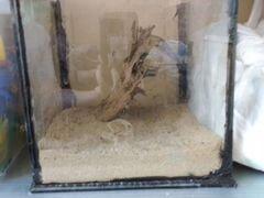 Аквариум с отварной корягой и промытым песком
