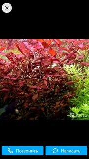 Растения объявление продам