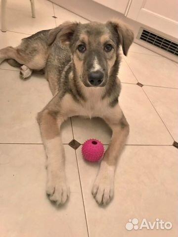Замечательный и необыкновенный Беня - щенок в дар купить на Зозу.ру - фотография № 5