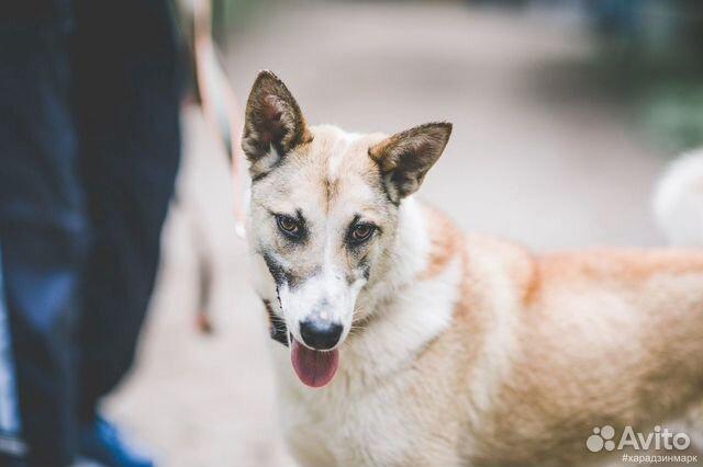 Джерри - идеальная собака в добрые руки купить на Зозу.ру - фотография № 2