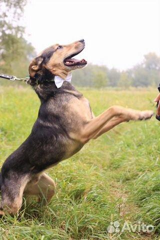 Красивейший пёс в дар в добрые руки купить на Зозу.ру - фотография № 5