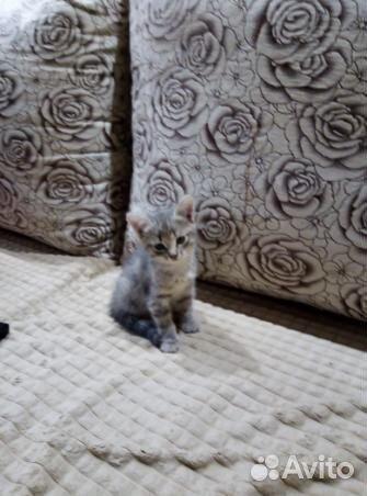 Отдам котенка в хорошие руки  89125741885 купить 3