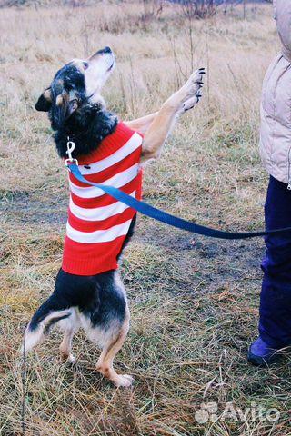 Собака ниже колена в дар купить на Зозу.ру - фотография № 7