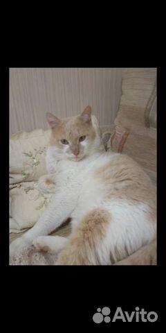Найден котик на остановке дт(дом Торговли) купить 1