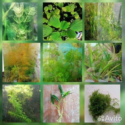 Аквариумные растения - 9 шт  89519173738 купить 1