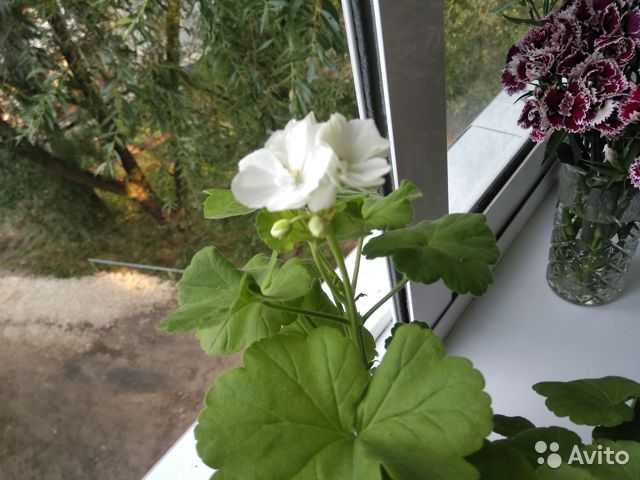Самые красивые цветы для Вашего дома  купить 6