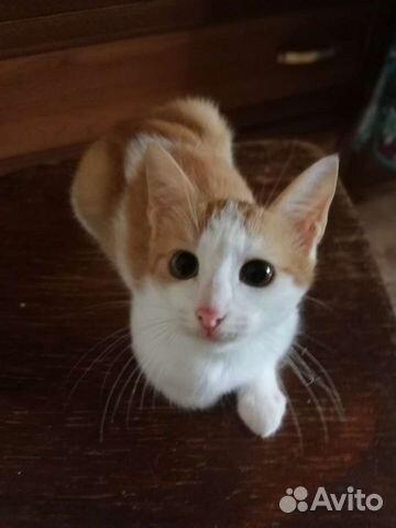 Отдам котенка  89209045246 купить 3