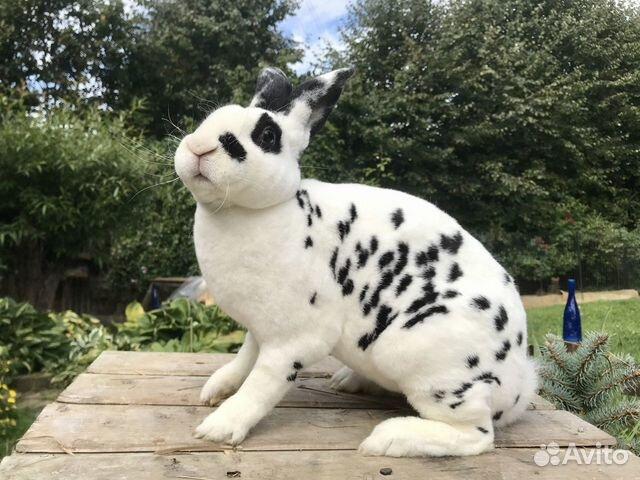 Кролики  89206193364 купить 2
