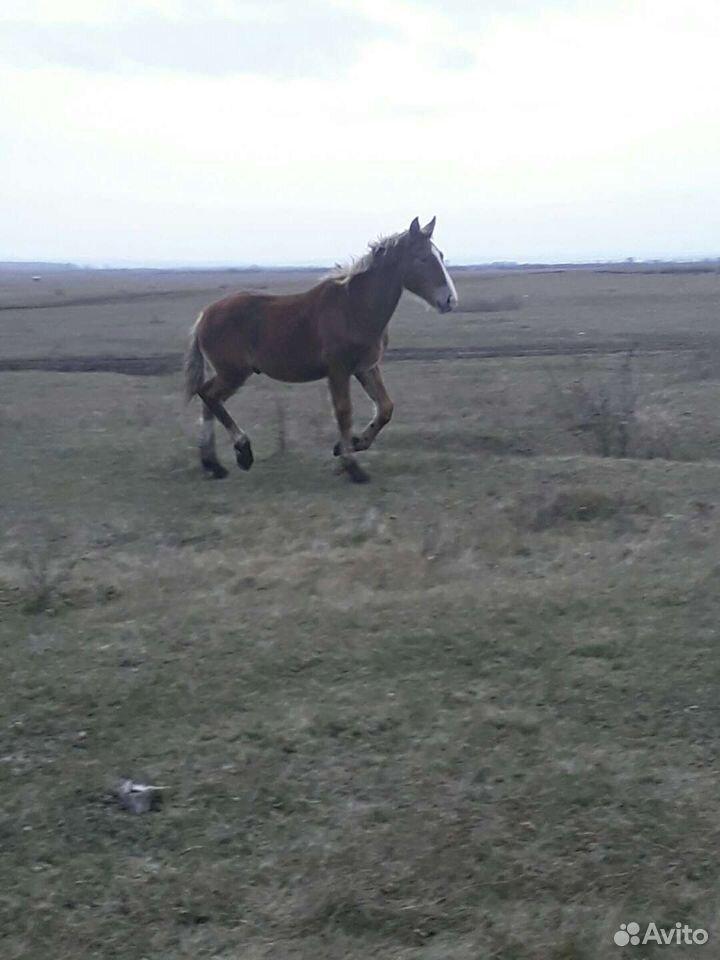 Лошадь  89994315740 купить 3