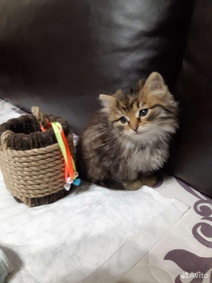 Кошечка,родилась16сентября.Очень умная,ходит в лот