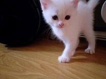 Котик белый в добрые руки