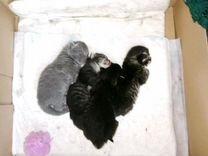 Котята 2 девочки и мальчик