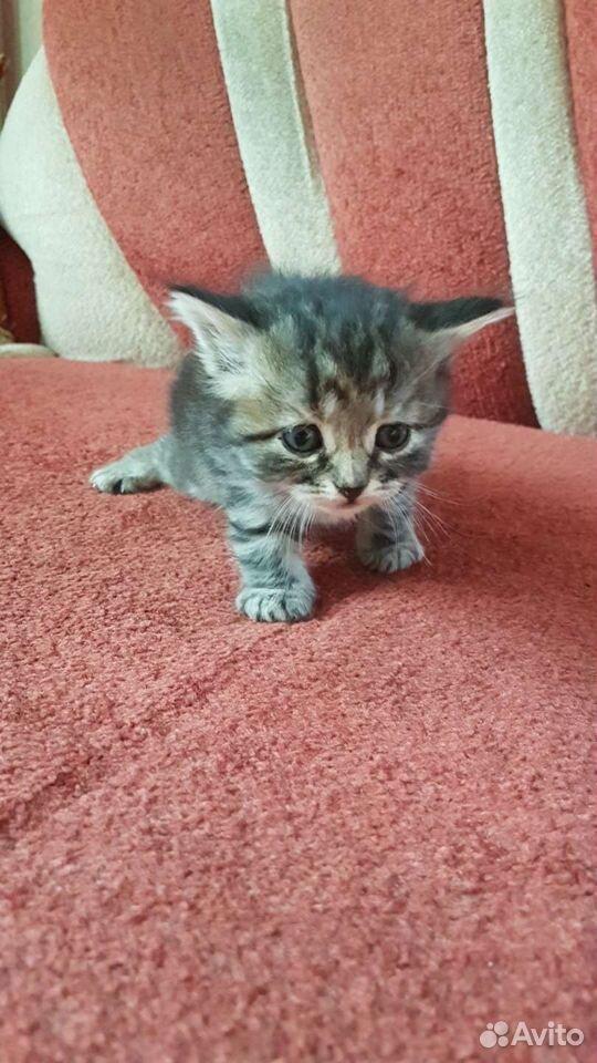 Отдам котят  89196683519 купить 9