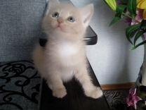 Отдам милых котят