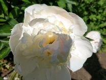 Цветы и кустарники для дачи