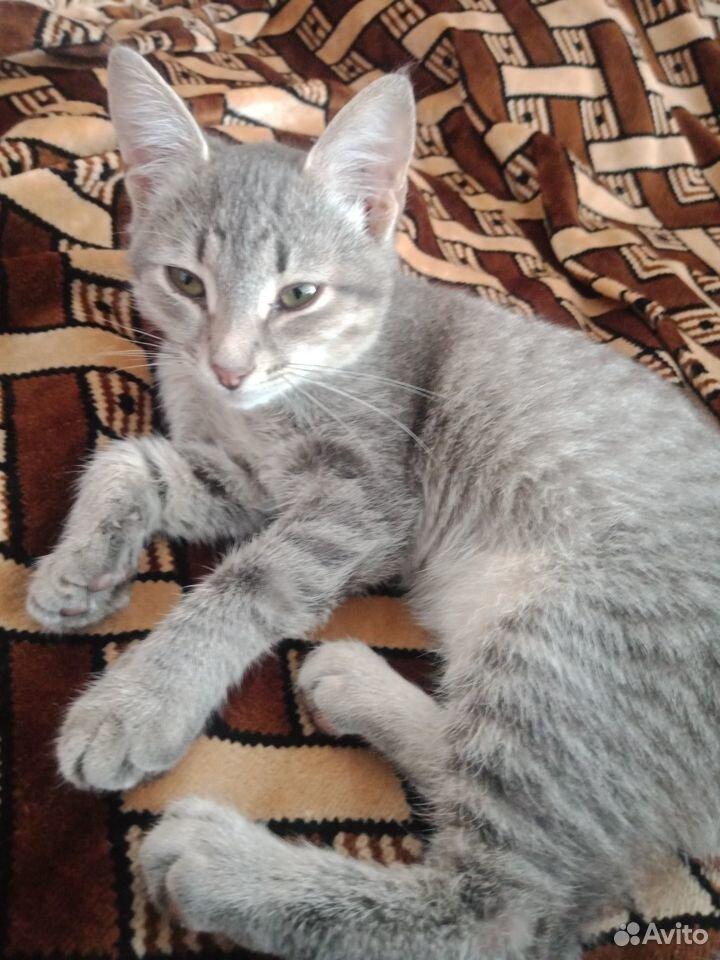 Кошка  89876700461 купить 1