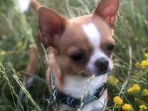 Ищем подружку — Собаки в Геленджике