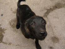 Отдам щенка в хорошие руки, возраст 3.5 месяца