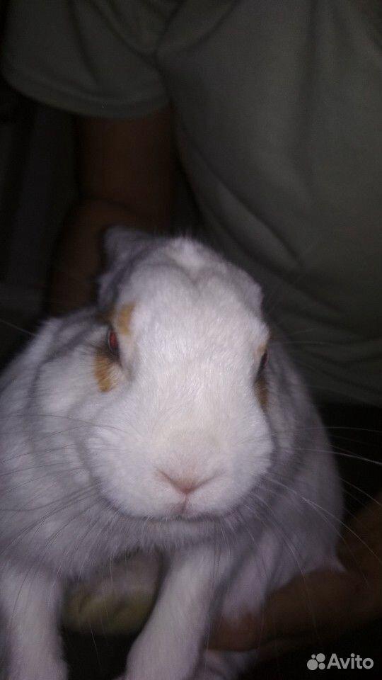 Кролик  89991156657 купить 1