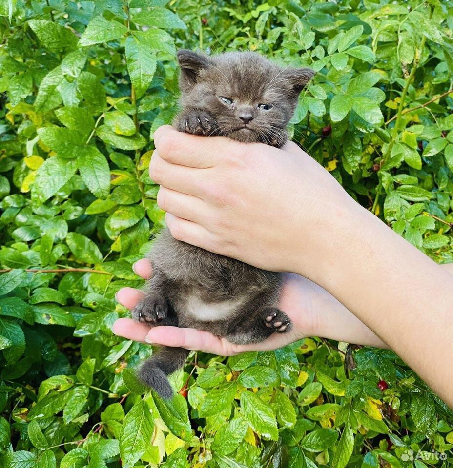 Кошечки и котики  89807082745 купить 4