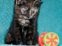 Ищат дом малыши котятки, возраст 1.5 месяца