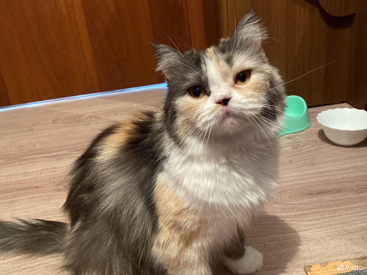 Кошка  89098900465 купить 6