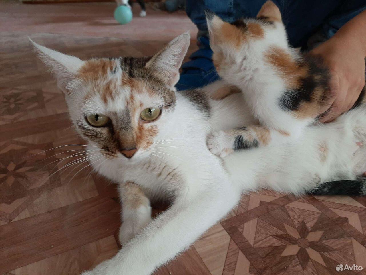 Кошка  89610008181 купить 4