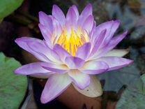 Украшаем водоем прекрасными растениями