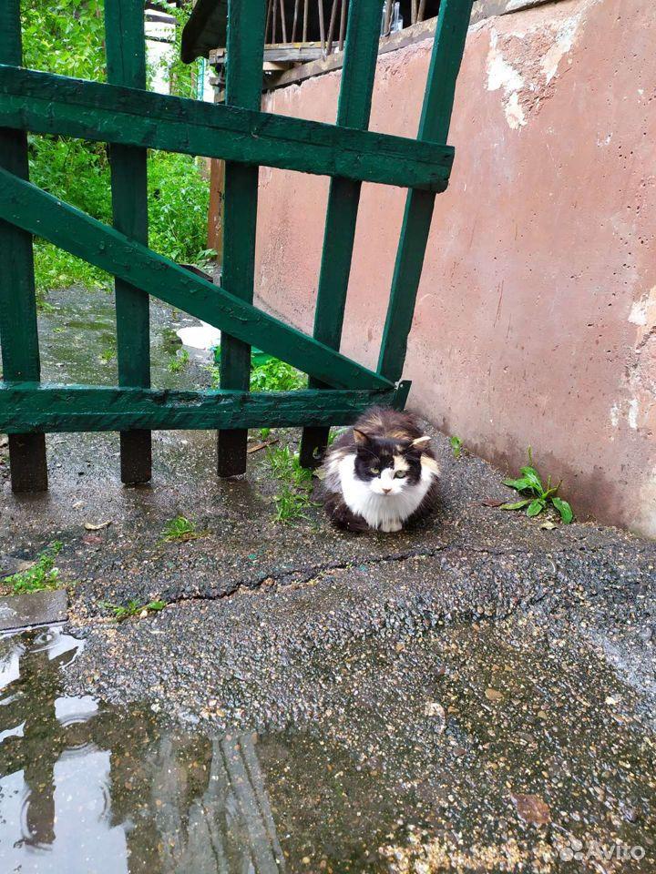Кошка счастья Настя