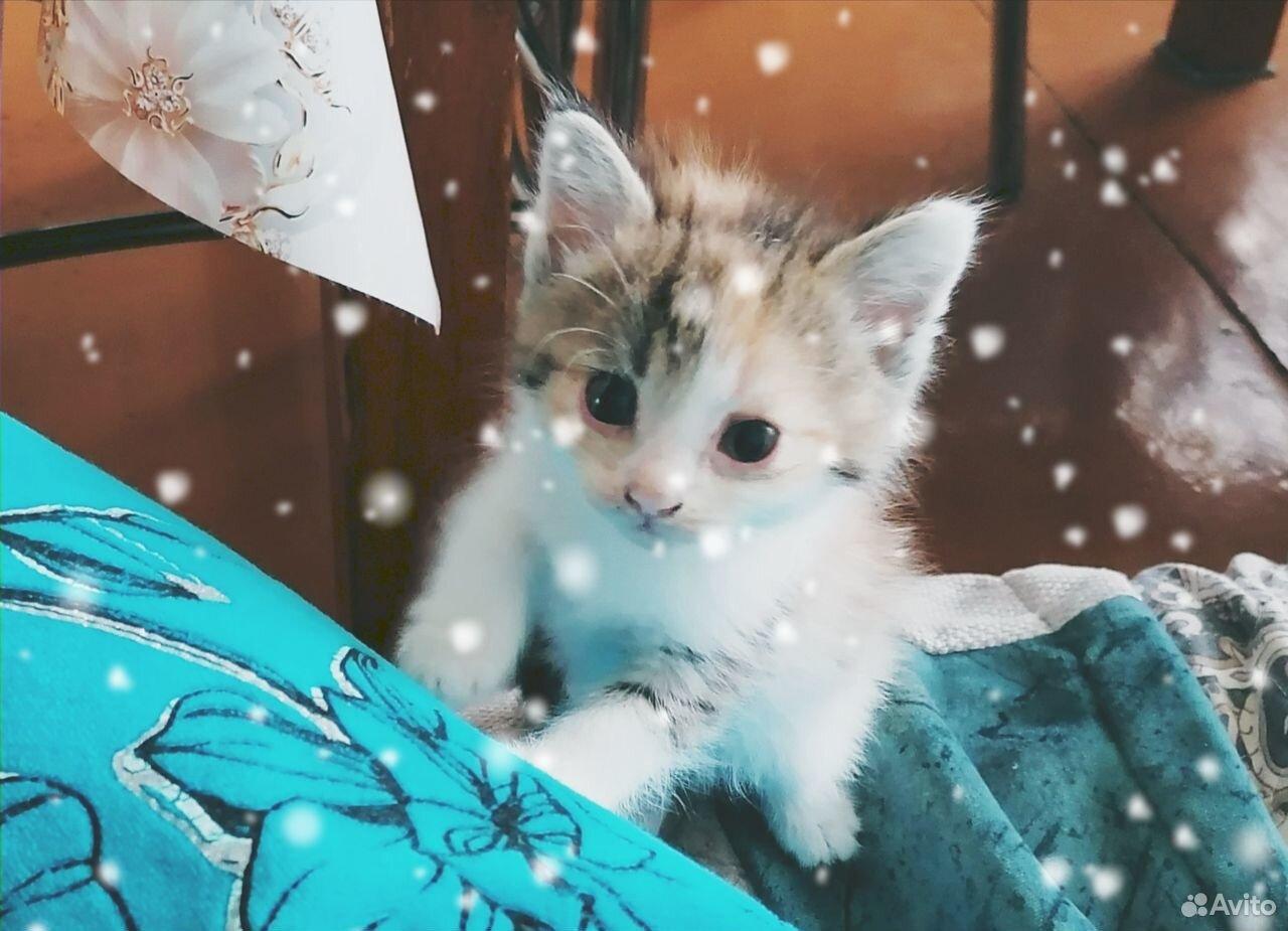Котята в добрые руки  89276495515 купить 1